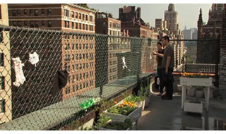 urban roof, NYC
